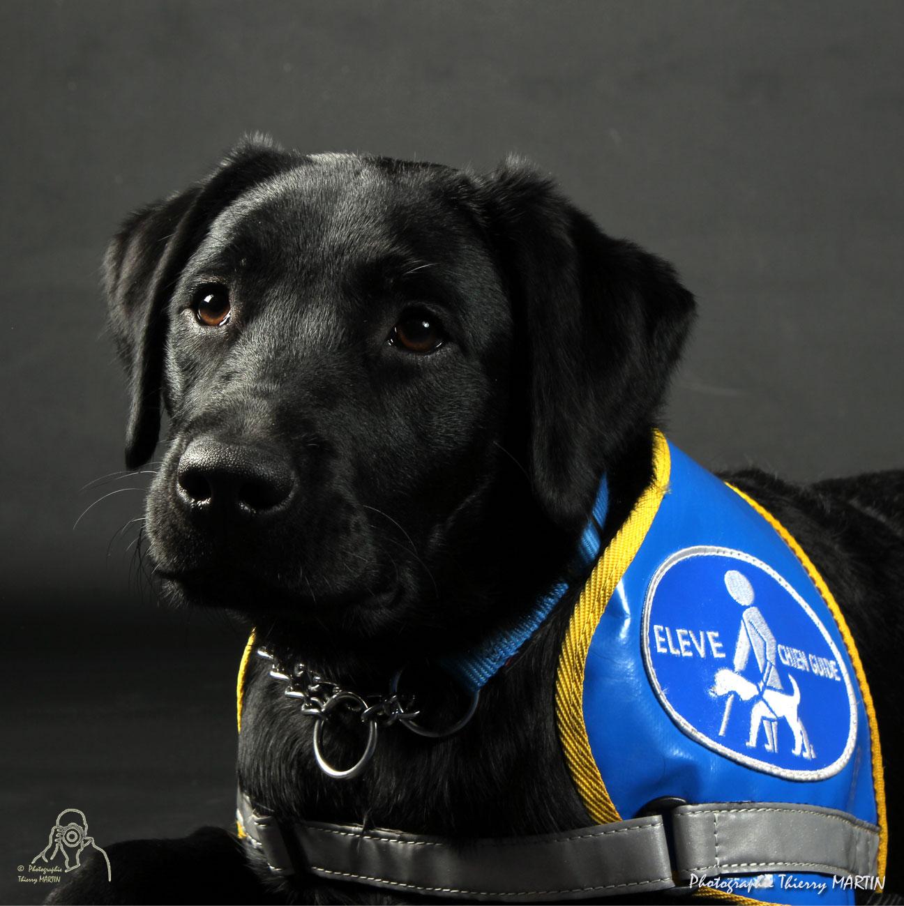 faire un legs pour les chiens guides d u2019aveugles de provence c u00f4te d u2019azur corse