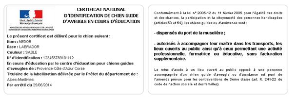 Certificat national d'identification de chien guide d'aveugle en cours d'éducation