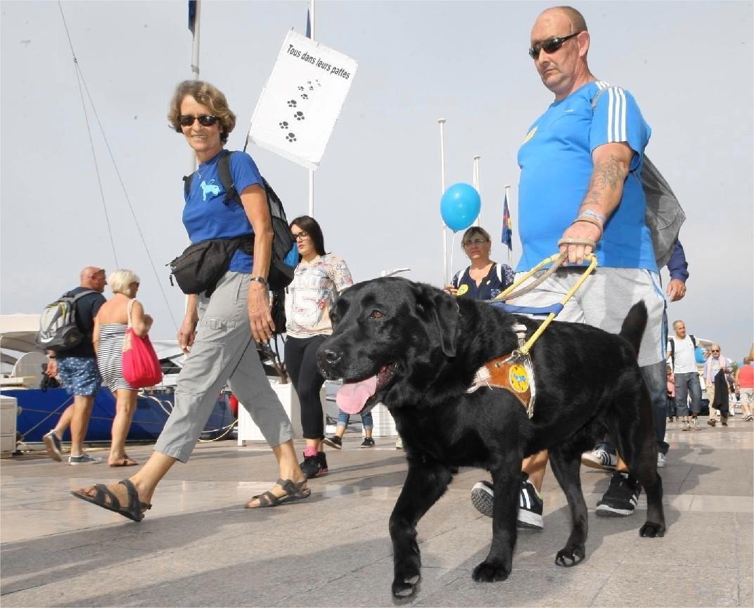 Marche des chiens guides d'aveugles dans les rues de Toulon