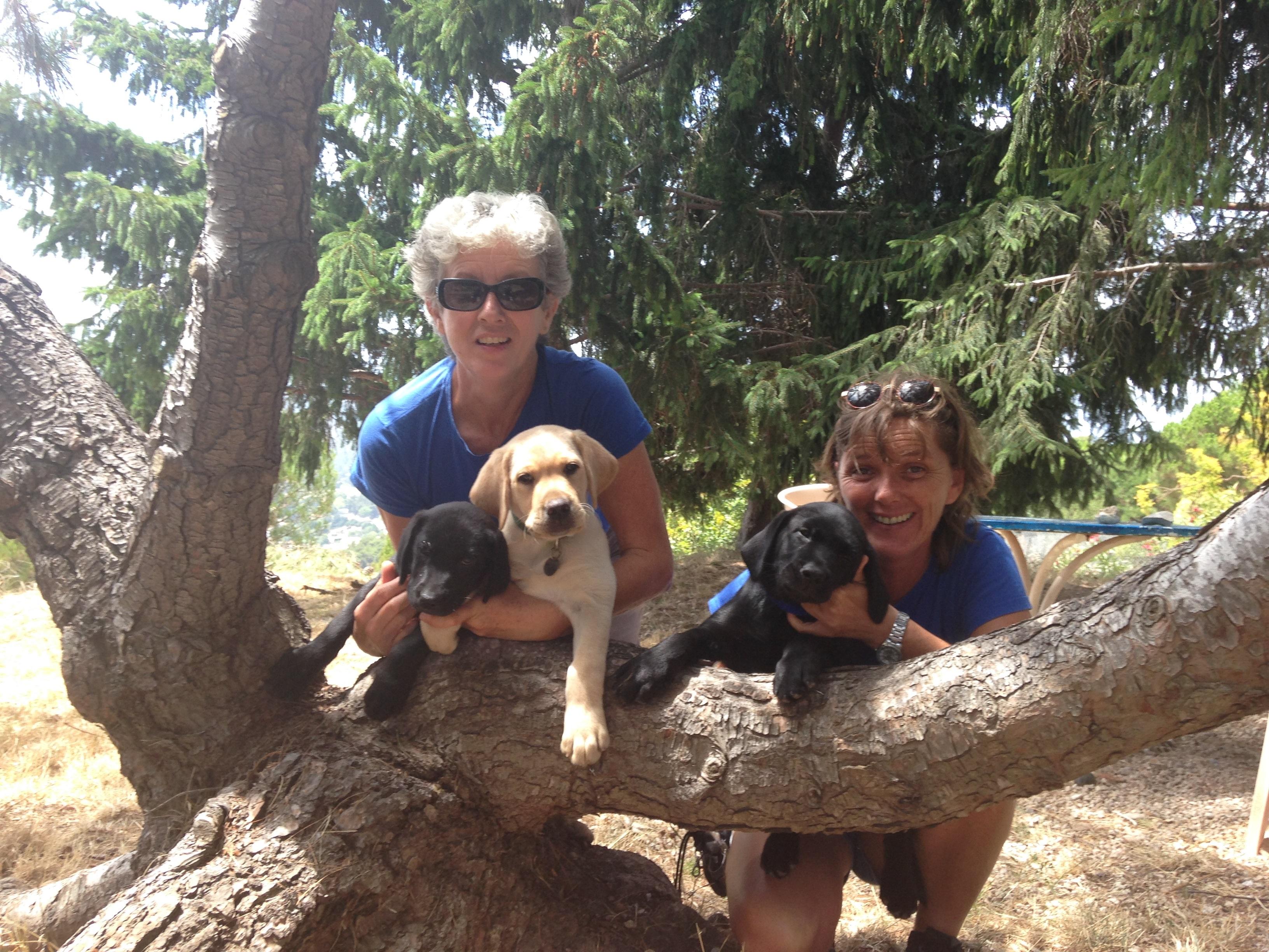 Animalier pour chien guide d'aveugle