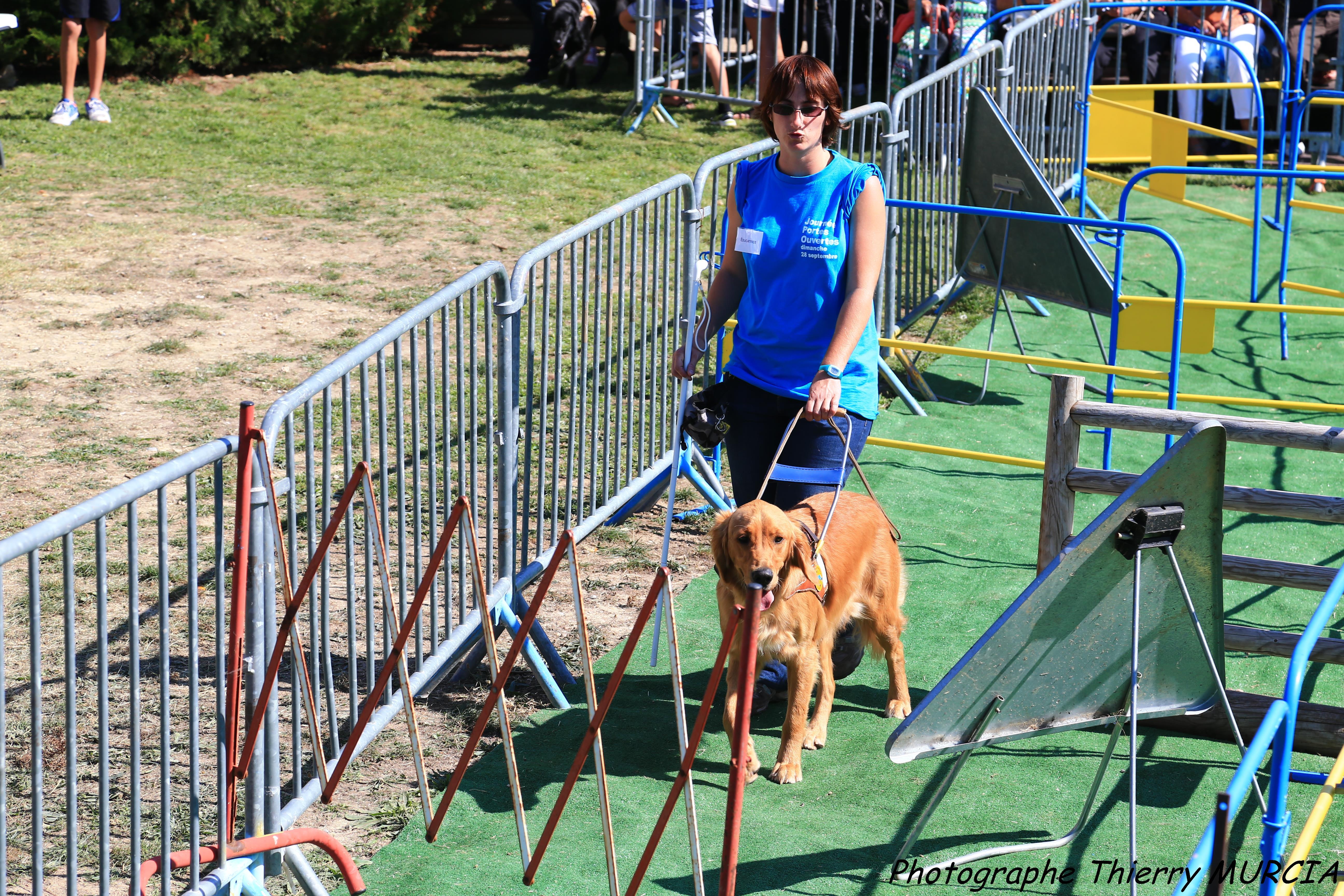 Éducateur pour chien guide d'aveugle